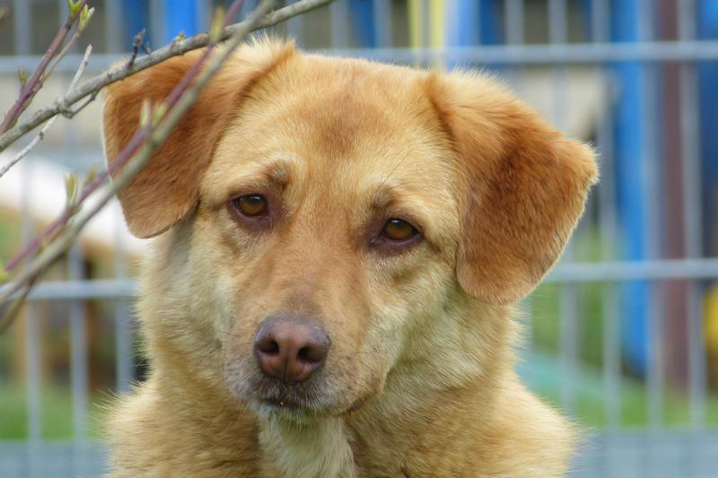 Unsere Hunde Mittelgross Tierheim Reutlingen