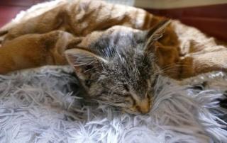 Calea kämpft um's Überleben...sie ist knapp 4 Monate alt und wurde dem Tod ziemlich nahe aufgefunden